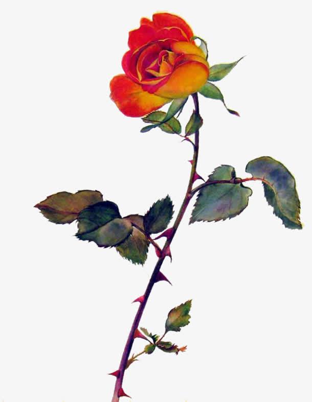 复古玫瑰花免抠png图片素材