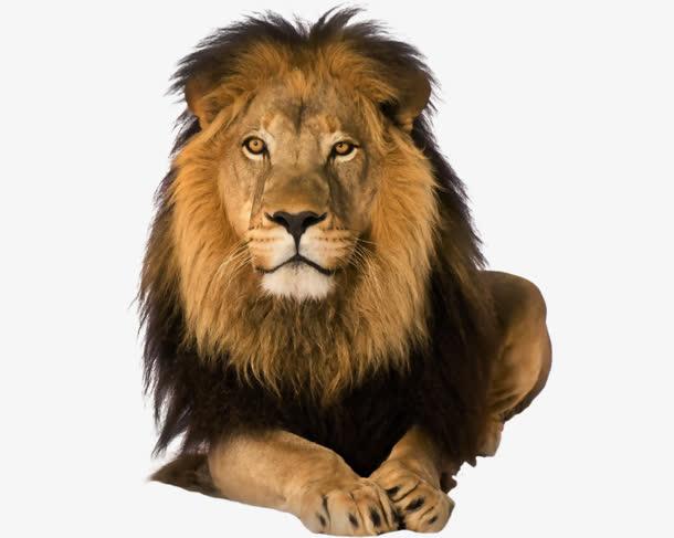 狮子免扣背景png素材