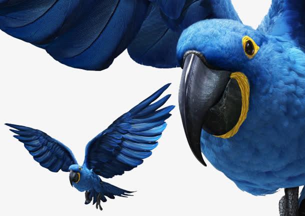 手绘/卡通 卡通元素 > 蓝色鹦鹉 鸟 动物png素材  收藏 610 编号veseq