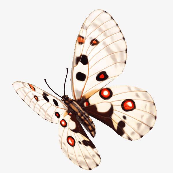 蝴蝶免抠png素材
