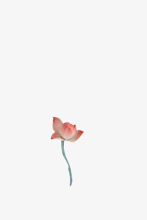 漂浮元素 花瓣 > 古风免扣 荷花 红色  收藏 [声明] 觅元素所有素材为