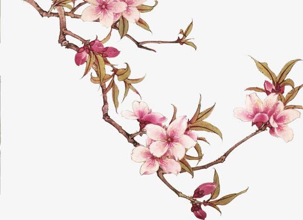 手绘桃花树,古风手绘桃花,手绘桃花素材,手绘水彩桃花,桃花树枝,桃花