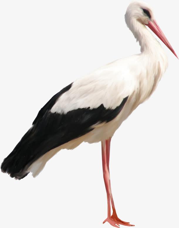 动植物元素 动物 > 鸟长嘴鸟  收藏 [声明] 觅元素所有素材为用户免费
