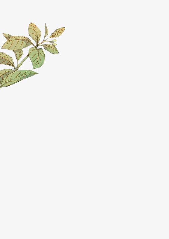 花枝枝头绿叶边框装饰