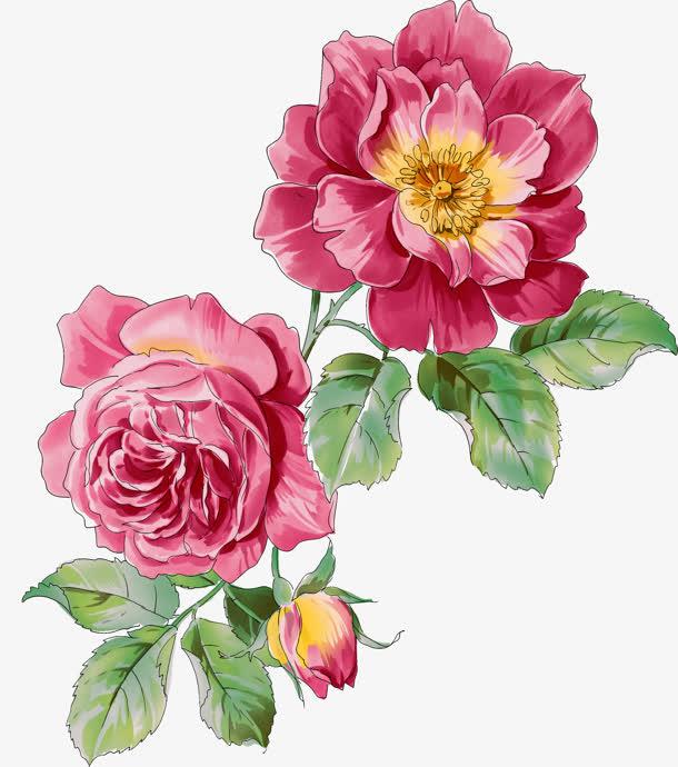 粉色月季花手绘素材