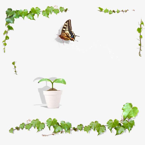 绿色植物藤蔓蝴蝶边框海报背景