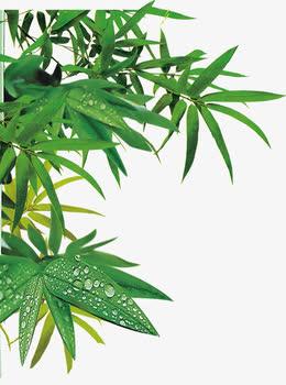 端午节绿叶竹叶叶子装饰