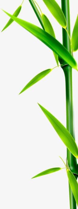 竹叶竹子端午节装饰