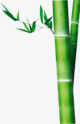 端午节竹子绿叶竹叶