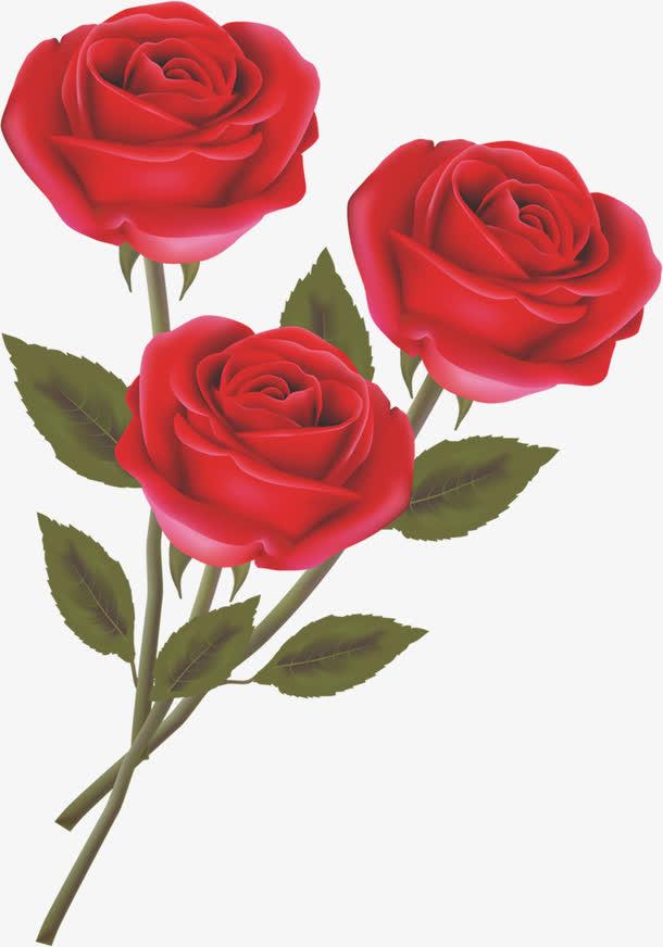 手绘红色玫瑰花朵