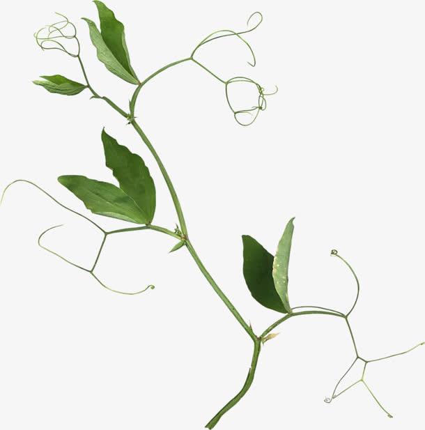 绿色藤蔓蜿蜒背景免抠素材免费下载_觅元素51yuansu.