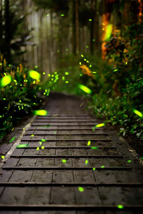 绿色深林小路萤火虫海报背景