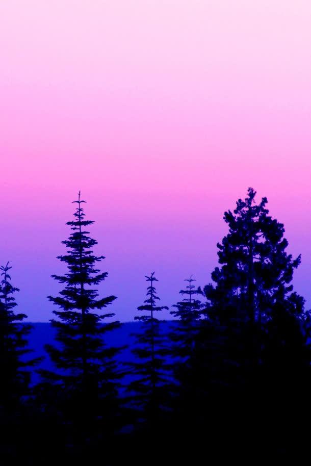 背景元素 摄影风景 > 粉色天空松树林海报背景  收藏 100 编号qeclnik