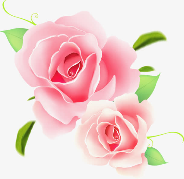 粉色手绘盛开玫瑰花