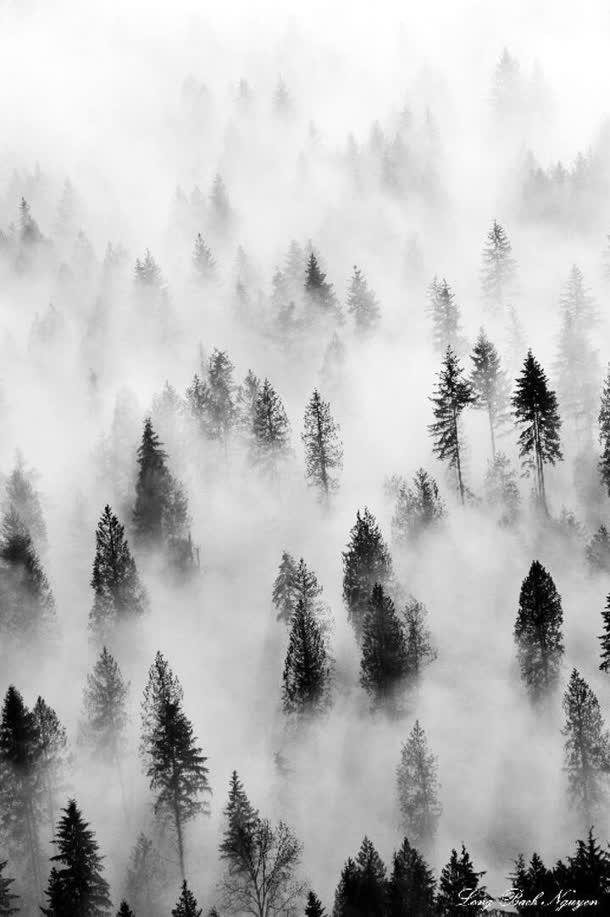 背景元素 摄影风景 > 烟雾缭绕树叶白色  收藏 [声明] 觅元素所有素材