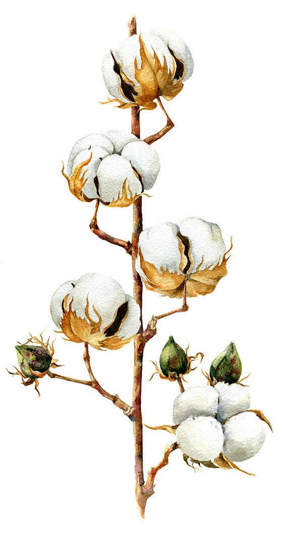 手绘白色棉花树枝免抠素材免费下载_觅元素51yuansu.