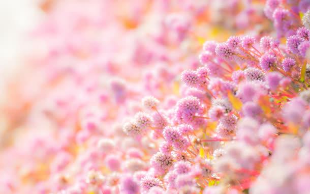 背景元素 摄影风景 > 粉色唯美花朵成片朦胧背景  收藏 下载高清图片
