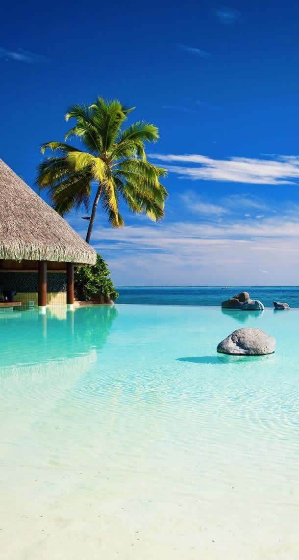 蓝色天空海边椰林