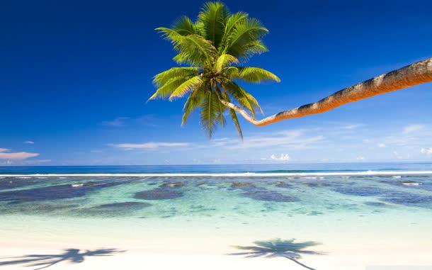 蓝天大海椰林风景